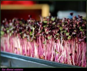 sprouts purplew